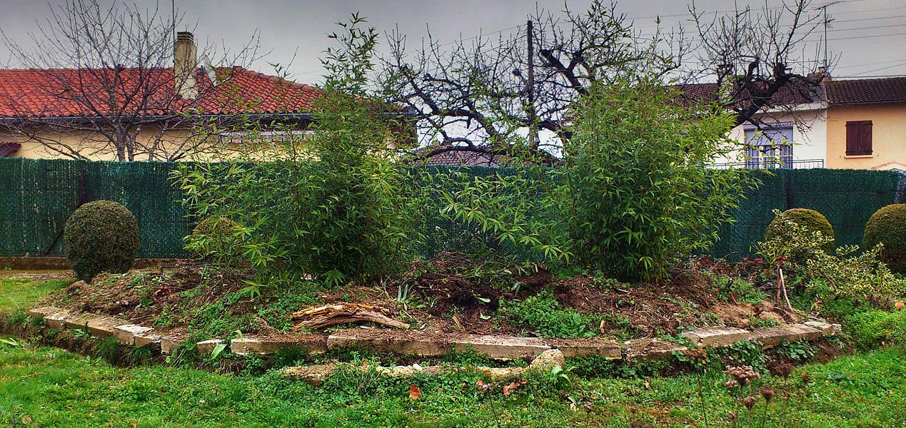 Quand supprimer des chaumes forum des fous de bambous - Amenagement petit jardin bambou calais ...
