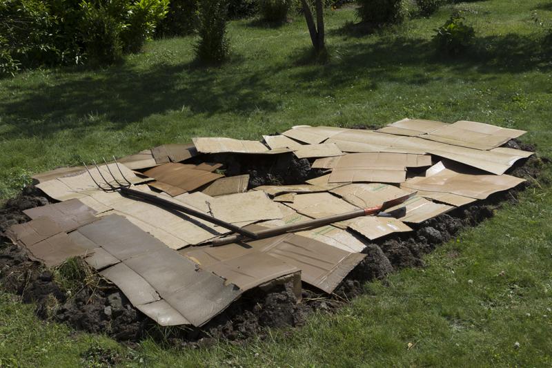 jardin de moussu page 10 forum des fous de bambous. Black Bedroom Furniture Sets. Home Design Ideas