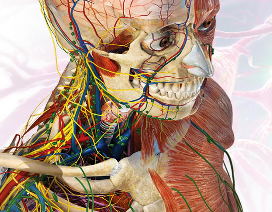 Anatomie Du Corps Humain l'anatomie du corps humain