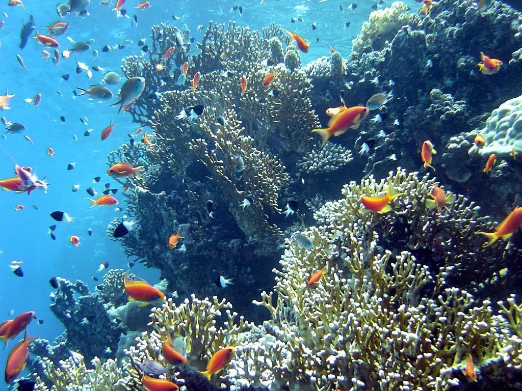 La pr servation de l 39 eau for Poisson pour mare