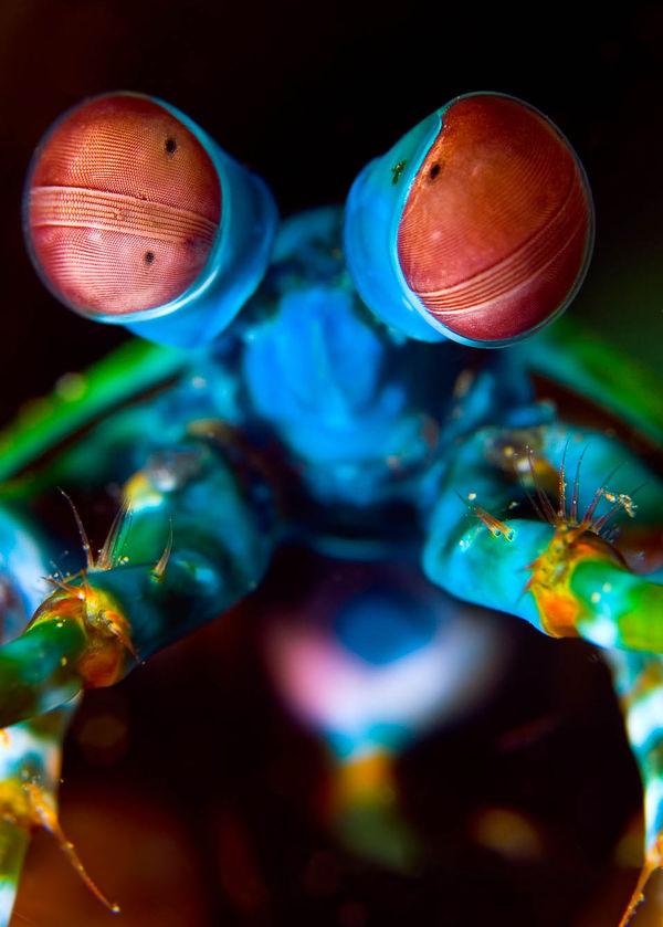 gène yeux bleus