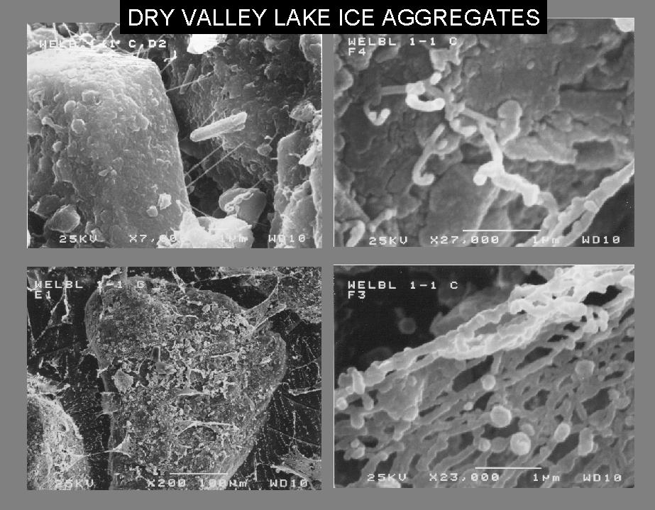 Différents microbes découverts respectivement dans la glace du lac