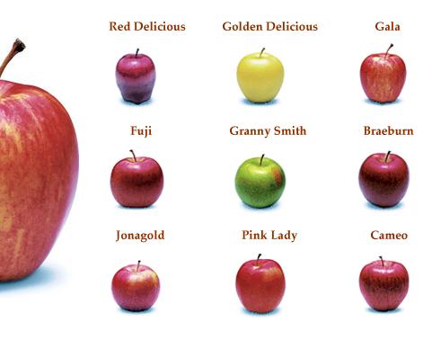 La biodiversit - Tableau pomme de terre varietes ...