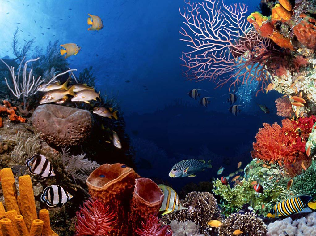 Faune et flore marines.Fotos sousmarine