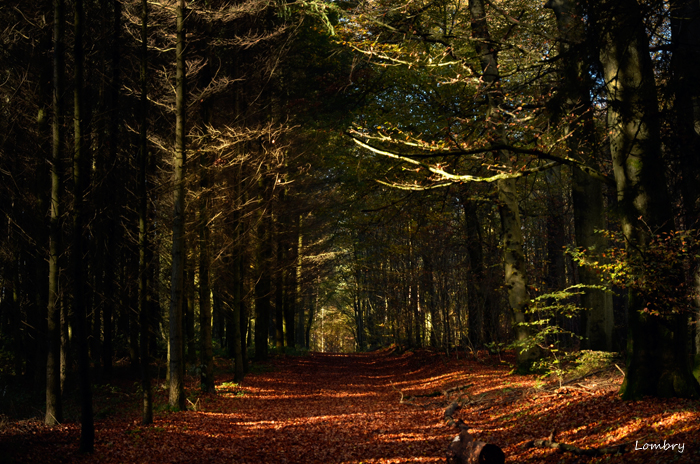 Magasin Bio Aulnay Sous Bois - Les quatre saisons The four seasons