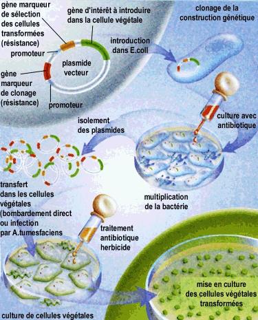 Les solutions du microorganisme végétal des ongles sur les pieds la liste
