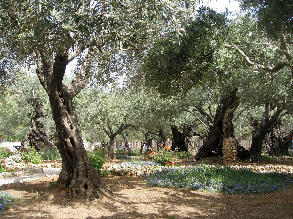 La bible face la critique historique for Jardin olivier