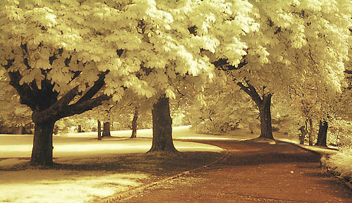 Infrared and ultraviolet photography
