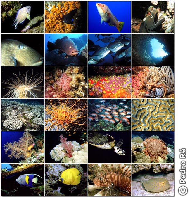 Pedro Ré's Marine Biology Page