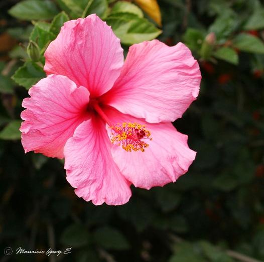 BUSQUEMOS HERMOSAS FLORES Flor_con_35mm_1_0