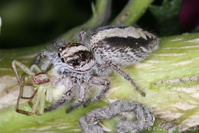 Arañas y tarantulas Imagenes
