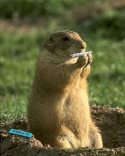 le règne animal en image et par alpha Marmotte