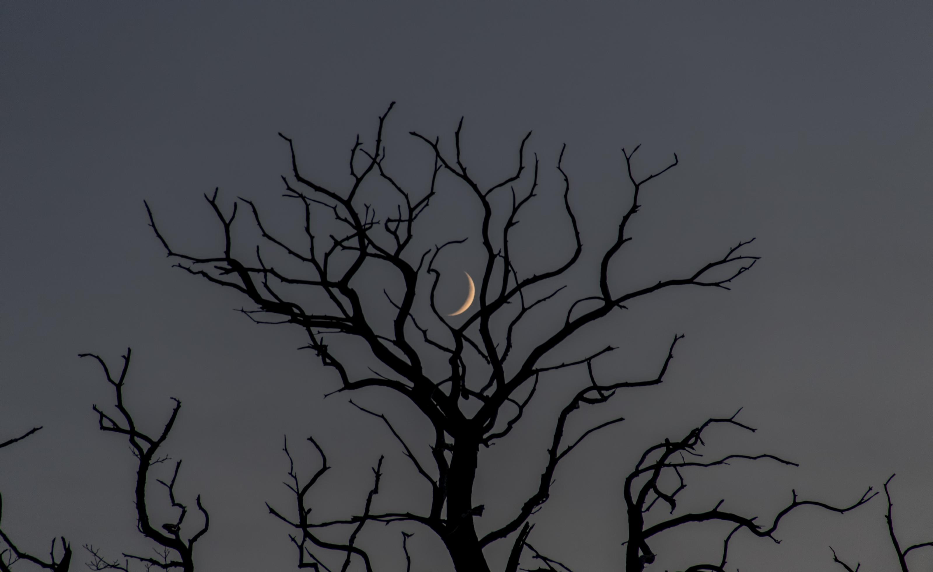 L'arbre et la Lune