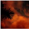 Lune - Nuages et oiseaux au soleil couchant Version 2