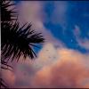 La lune et les oiseaux au soleil couchant