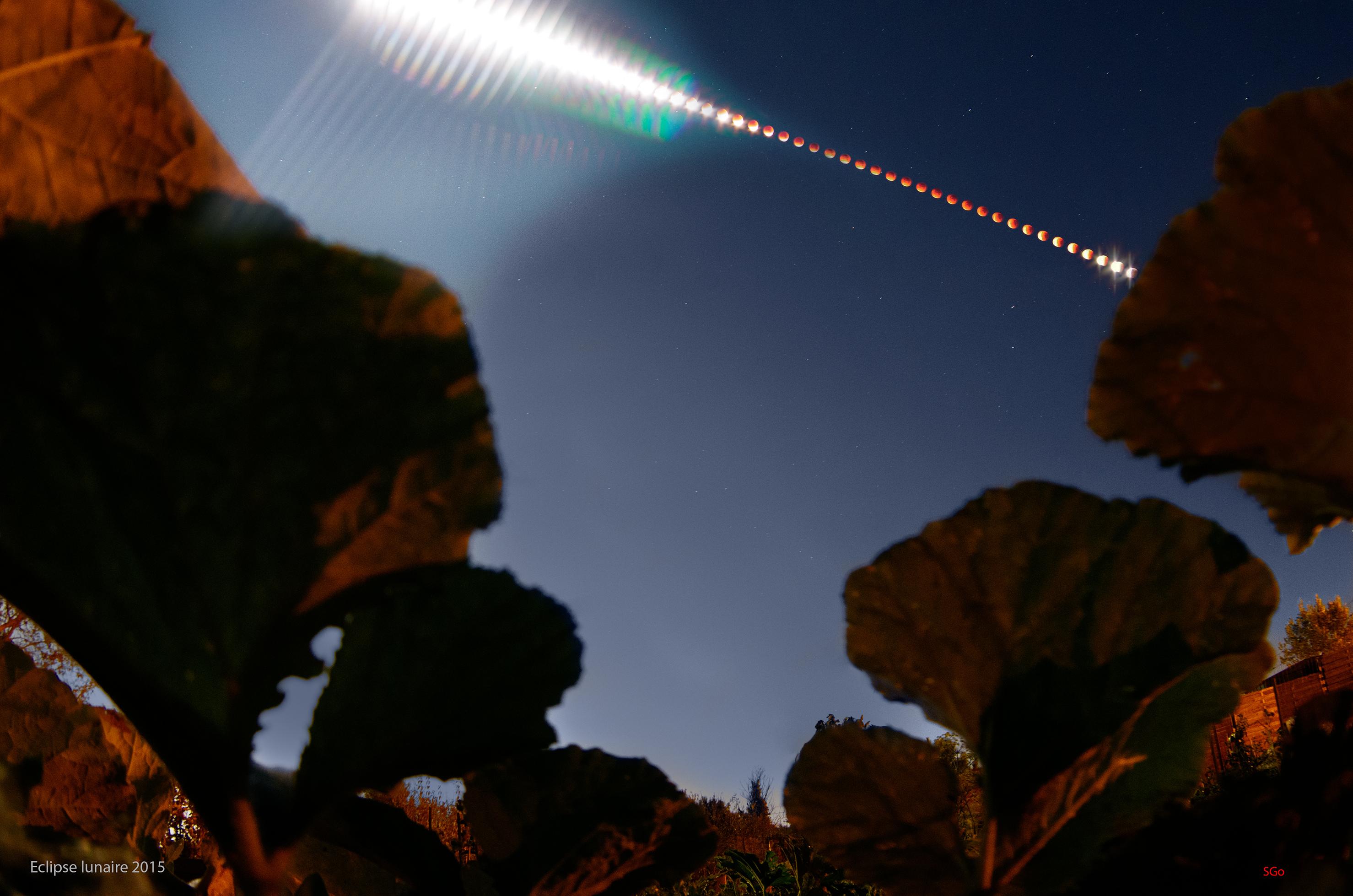 montage eclipse lunaire 2015 parmis les courgettes.jpg