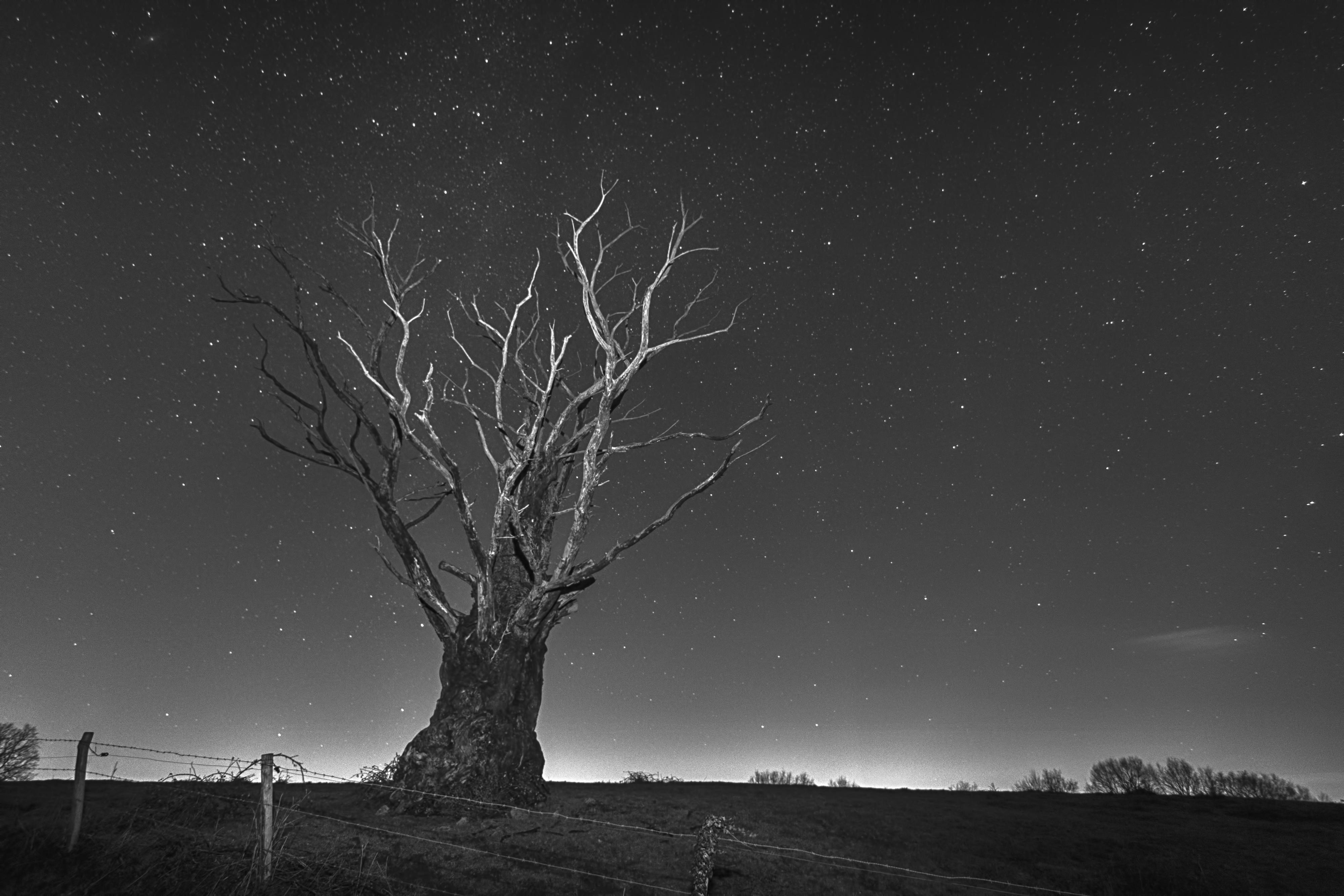 Le vieil arbre sous les étoiles