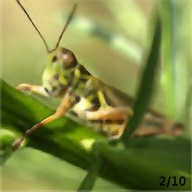 nature_2.png.2d3f1daa6583b78aa2079f1e4293a962.png
