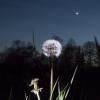 Coucher de Vénus et de la lune sous le regard d'une jolie limace...