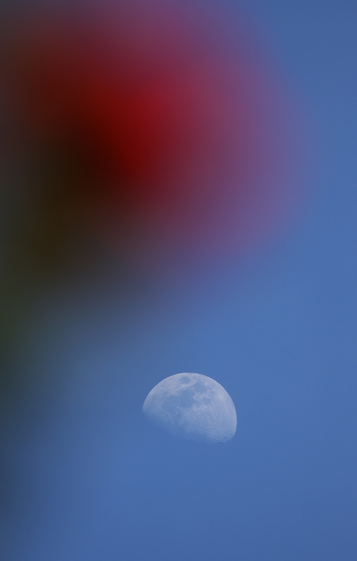 la lune , au soir du 24/04/2018 (42203.JPG)