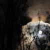 lune danse avec les bourgeons, Jupiter observe