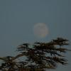 la lune, au soir du 26/06/2018 (45499/500/507/513.JPG)