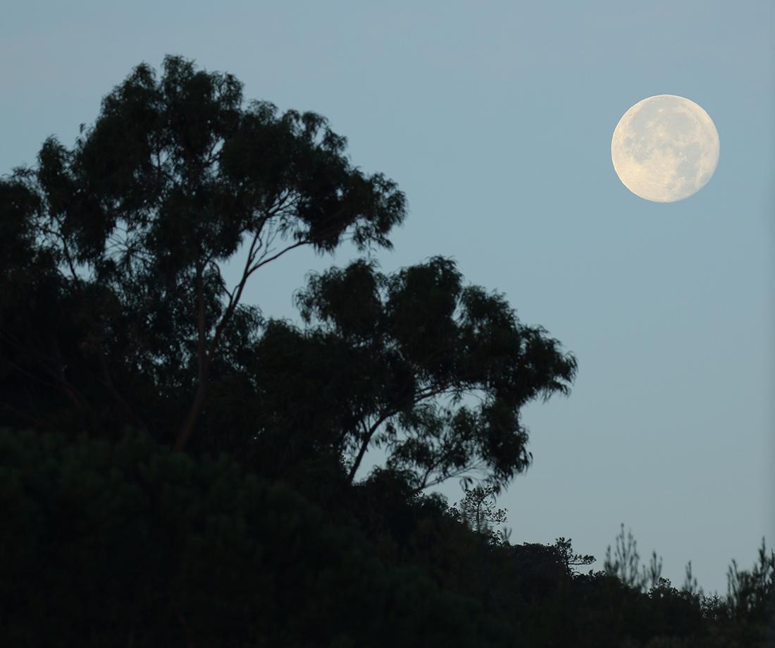 la lune, au matin du 24/11/2018 (52388/393.)