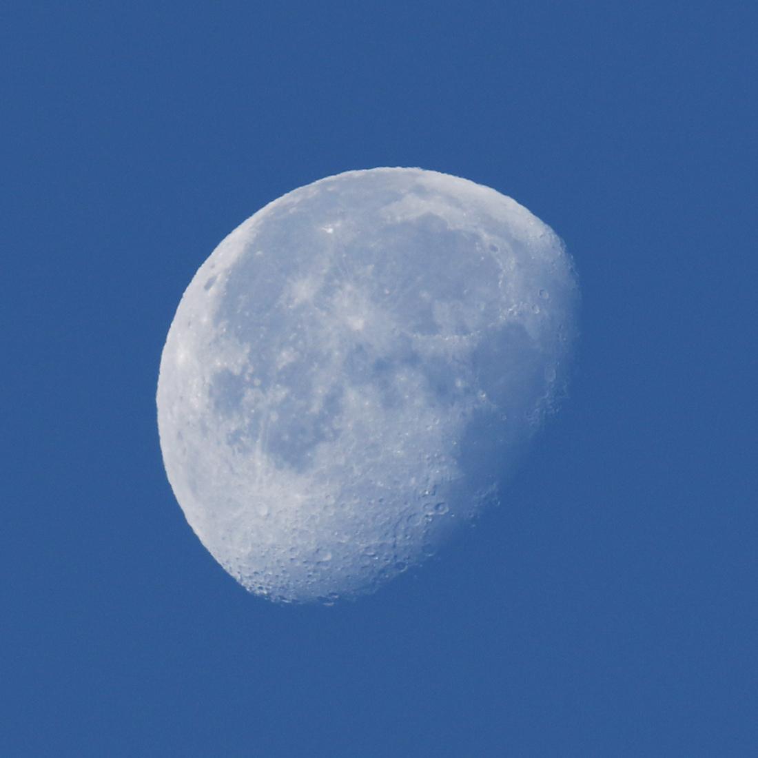 la lune, bleue, au matin du 27/11/2018 (52775/781)