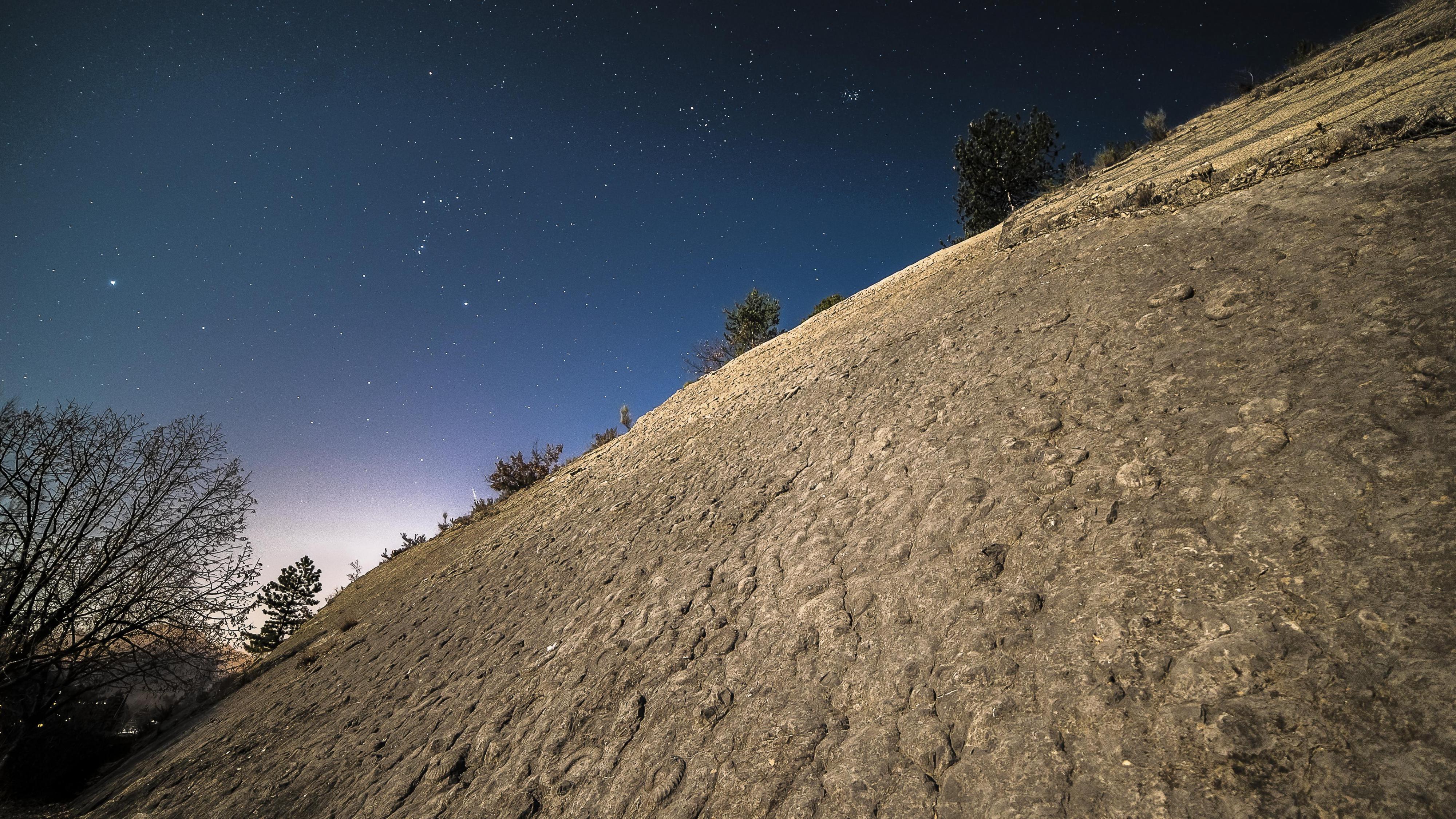 Ammonites au clair de Lune.jpg