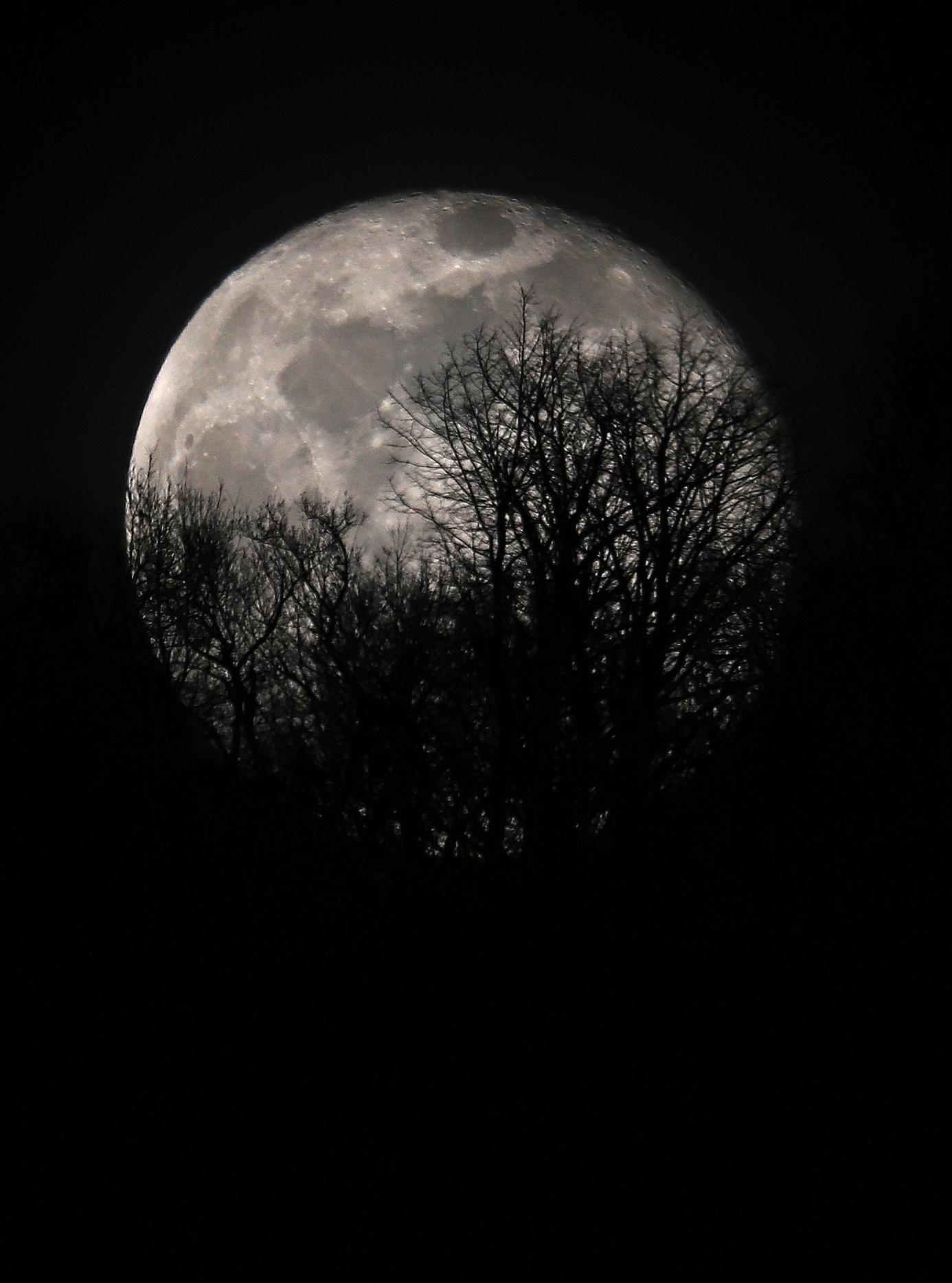 Lune derrière les arbres.