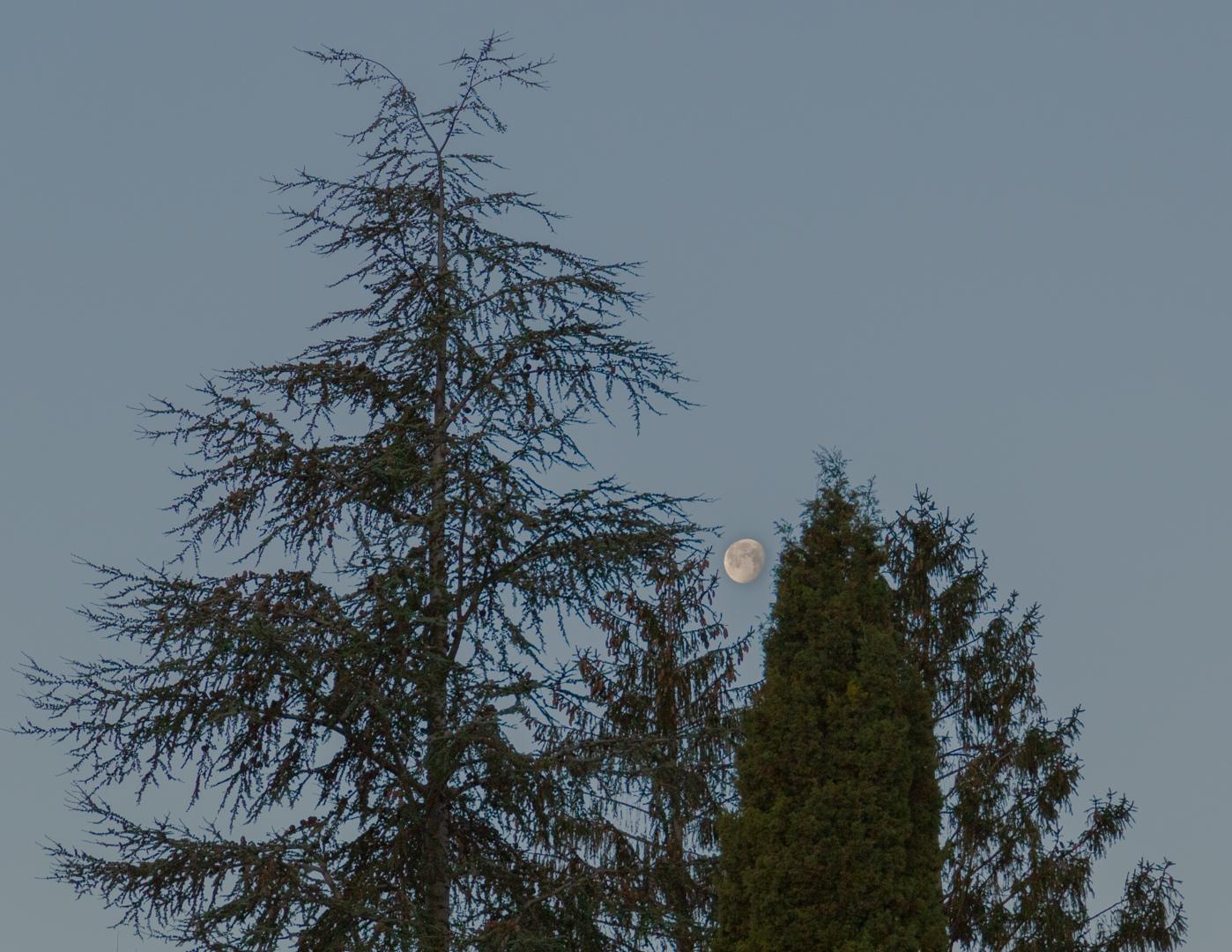 lune_et_arbre-105mm-1080p-hdr.jpg