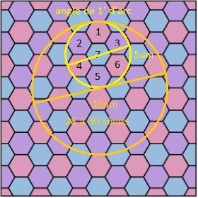 sur-echantillonage-oeil_hexagonal.jpg.f679993ea70a7b03b58d3f5121149c3e.jpg