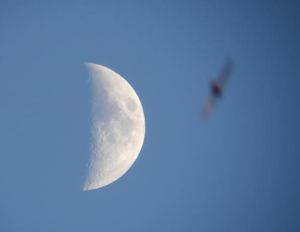 moon080701.png.6edd6b2e3800475b64f48d0234df7ee6.png