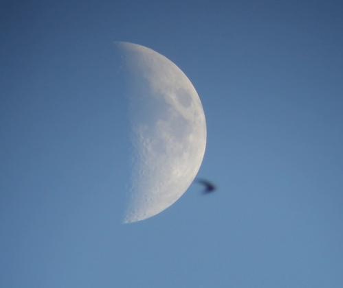 moon080702.png.63d432084804d3baed439a315779e255.png