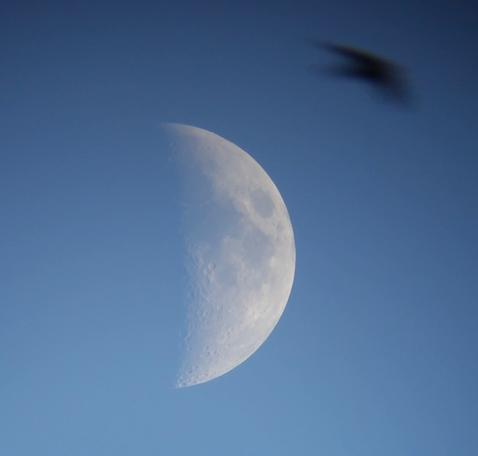 moon080703.png.635879f8c72c8b3da612824d4e427b84.png