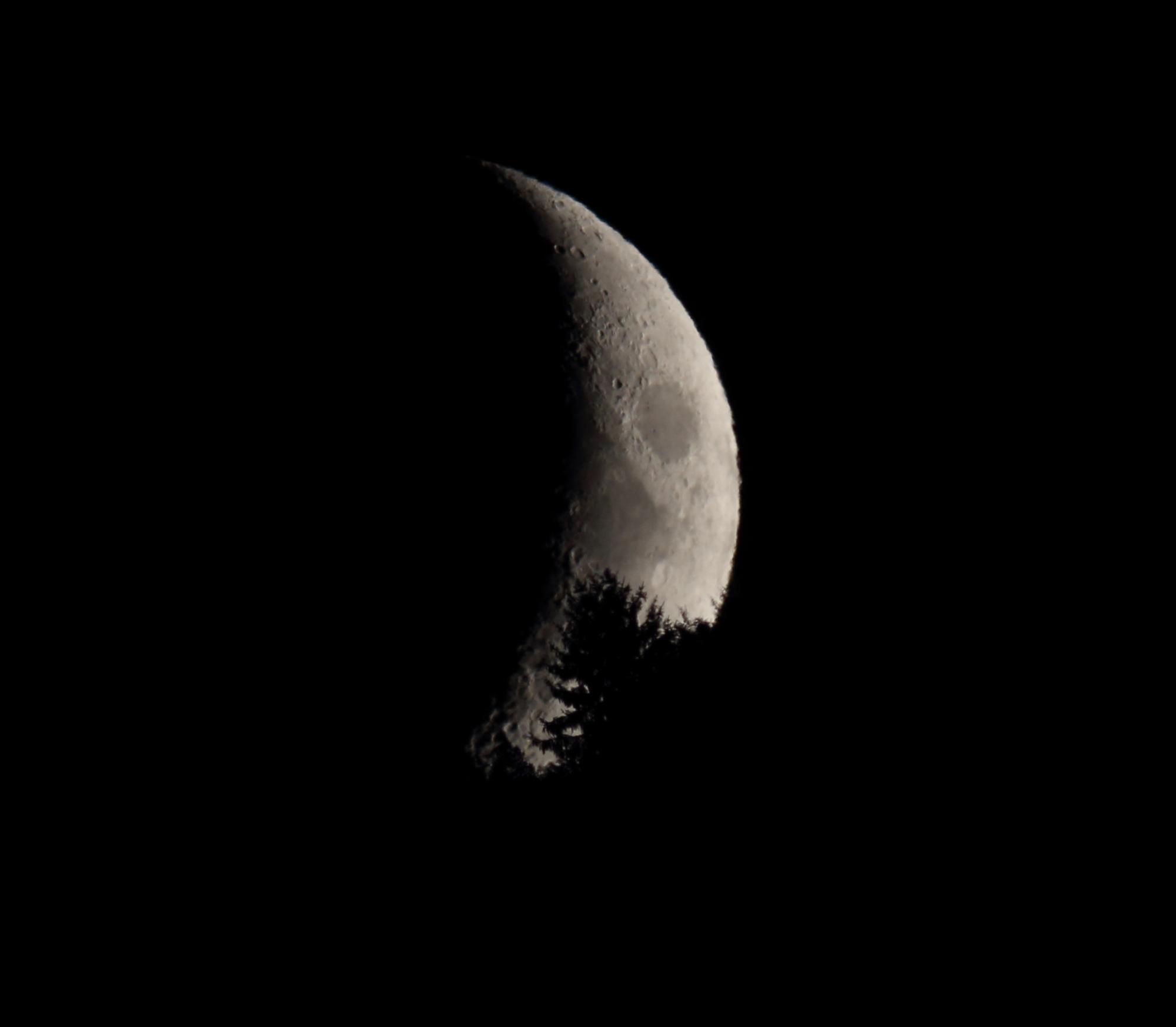 Lune recadrée 4e jour sapin.JPG