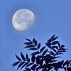 lune du matin fuji xt2