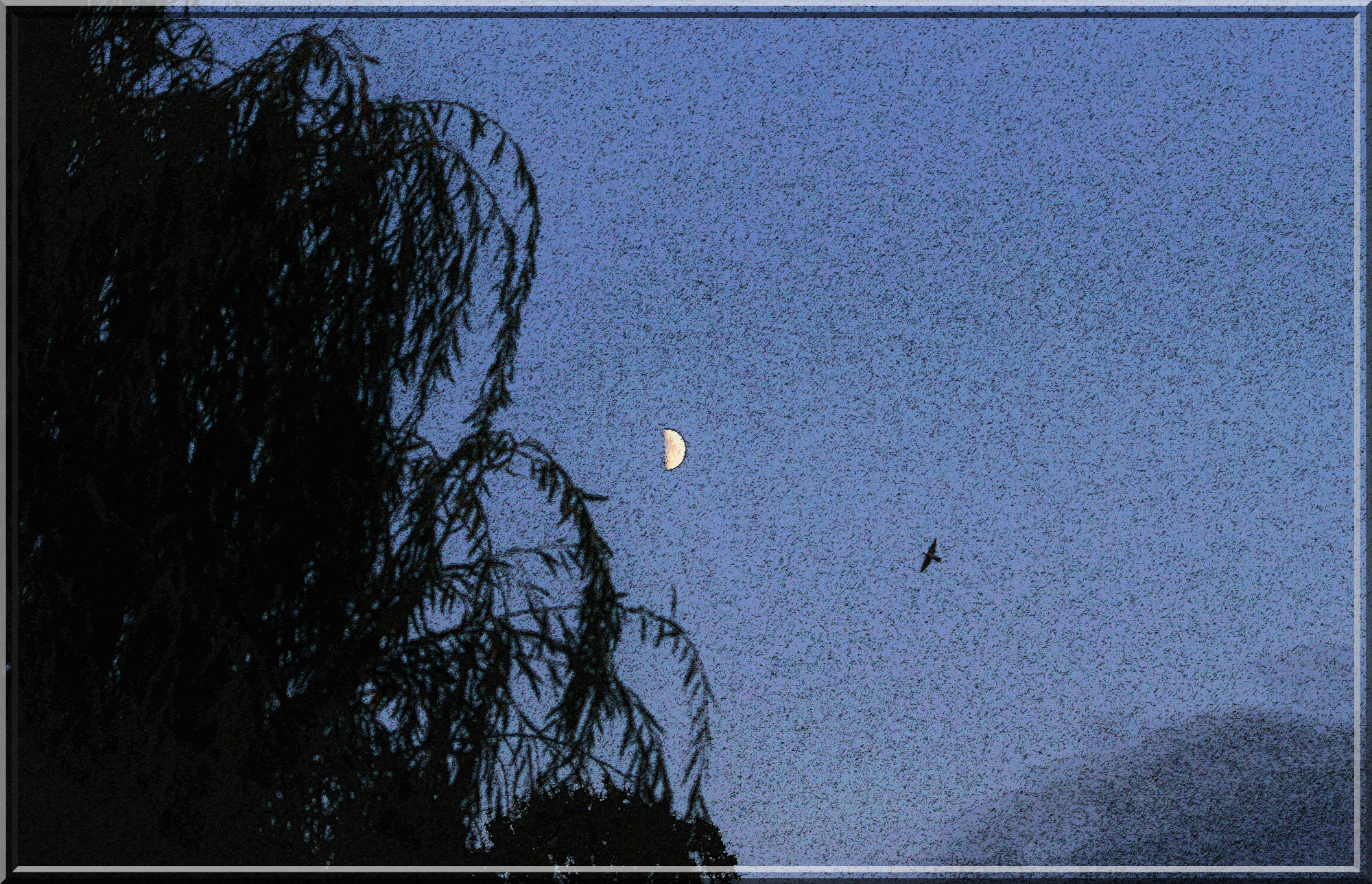 tableau_oiseau_BD.thumb.JPG.07a27067ca86870be018839f88e510c5.JPG