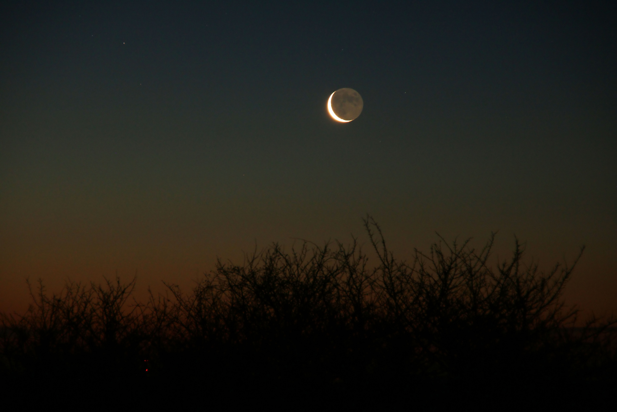 3 a Lune cendrée 1158B1N1 send.jpg