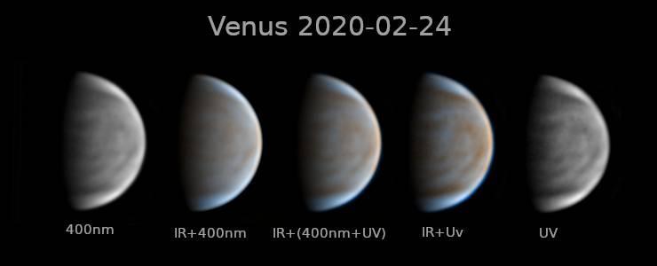 5e54eb2b957bc_VenusAntonio.jpg.c6fa1275feb0aa9c55f6261e19934cfb.jpg