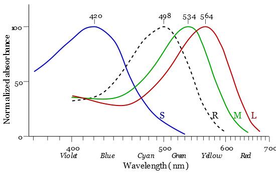 Cone-response.jpg.cbd62df07b562f95ed4df66d102f60cc.jpg