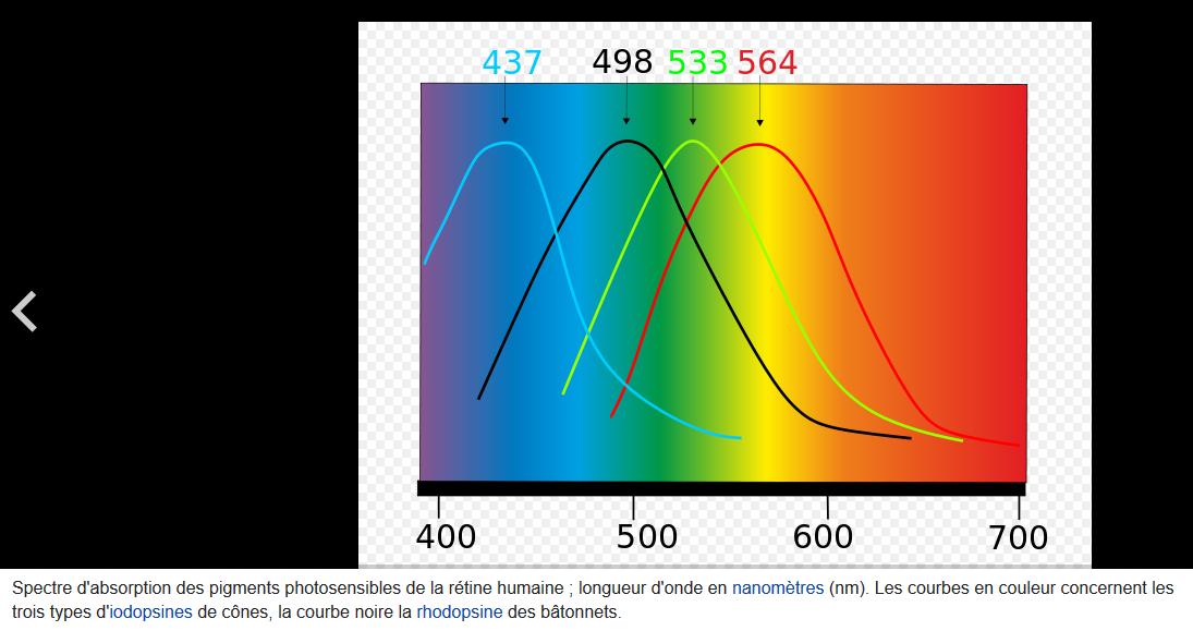 Spectre_absorption_des_cones.png.0905ecb68c6e05cbd29fa38a92a5730f.png