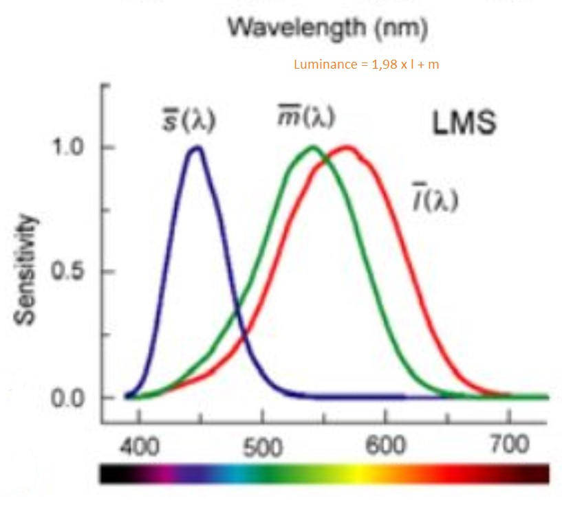 cone-sensitivity-LMS.jpg.207072d79ab0bdb663cb8788a6a54930.jpg