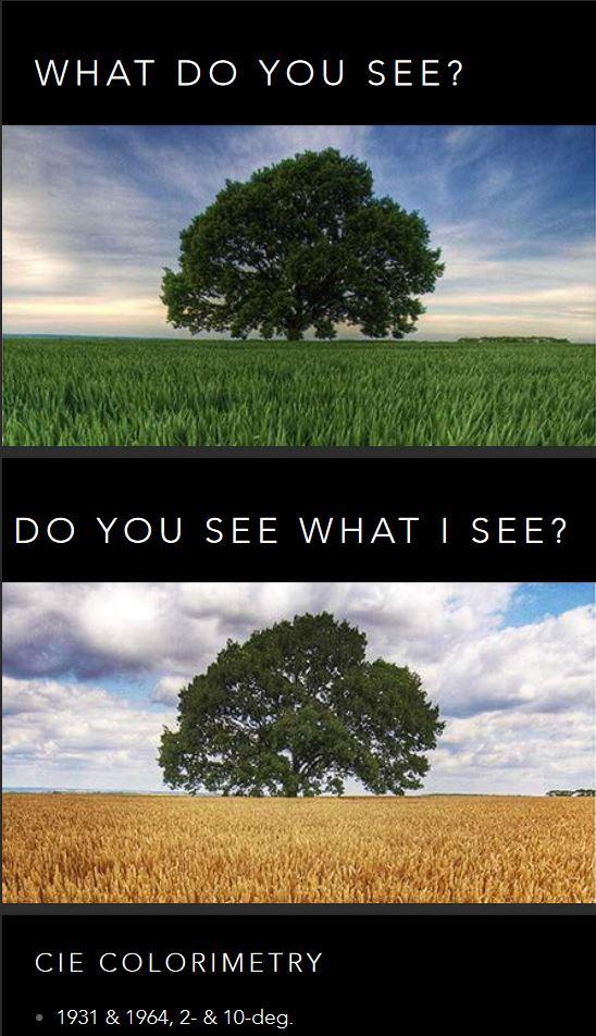 do-you-see-what-i-see.JPG.2c184cd76a33456209596d00c8e02237.JPG