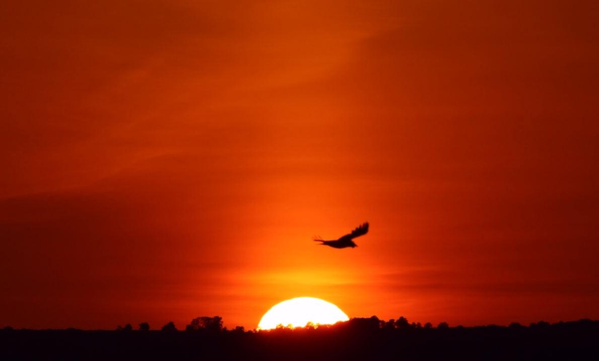 2020_05_24_Soleil_oiseau.jpg