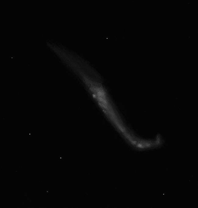 5ed00bba9f499_NGC4656CVn.jpg.fdcb2d576e6473650fc07a94ff56f740.jpg