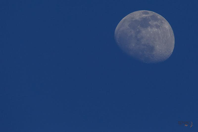 2020 - Lune et ciel Nocturne -0001.jpg