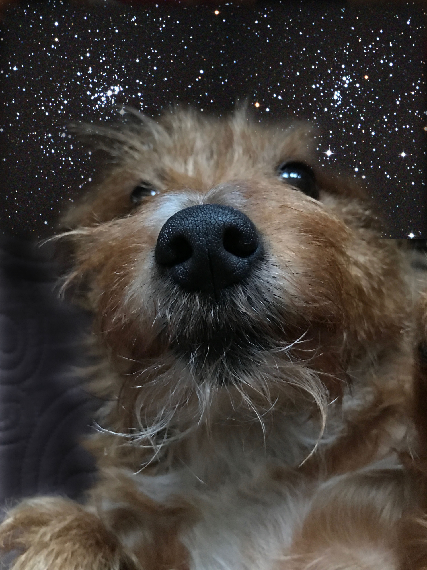 Chien galactique 2 7858 send.jpg