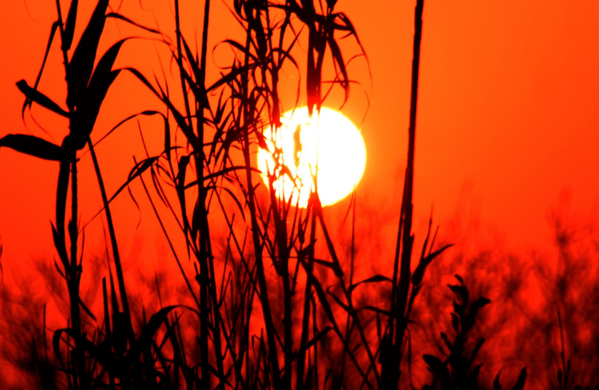 soleil 1.jpg