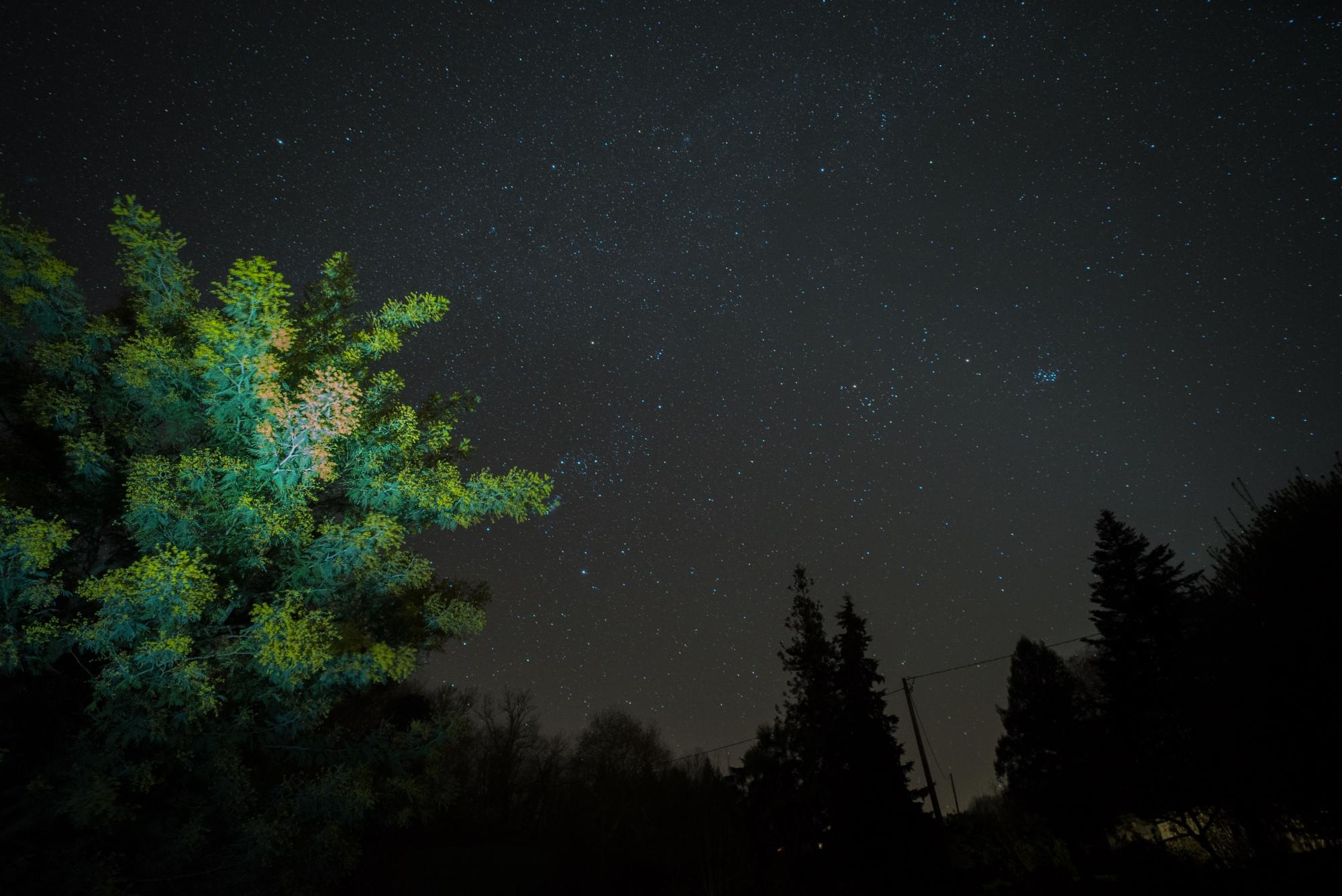 mimosa et étoiles 1.jpg